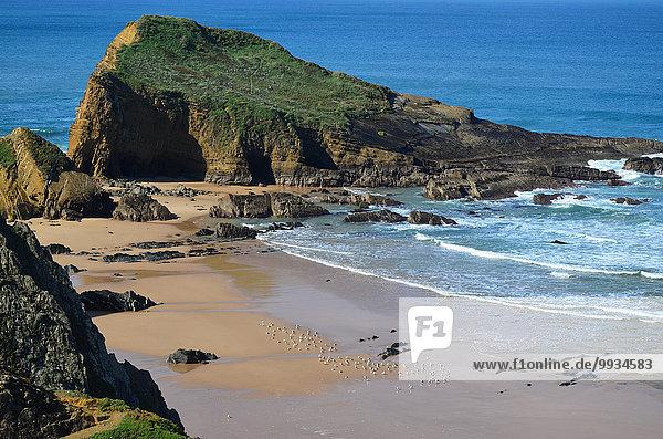 niedrig Europa Strand Steilküste Küste Wasserwelle Welle Meer Gezeiten Vogel Atlantischer Ozean Atlantik Sandstrand Alentejo Bucht Halbinsel Portugal