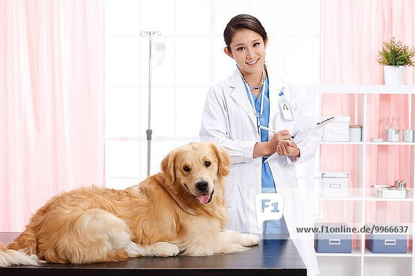 Produktion Tierarzt Prüfung Welpe