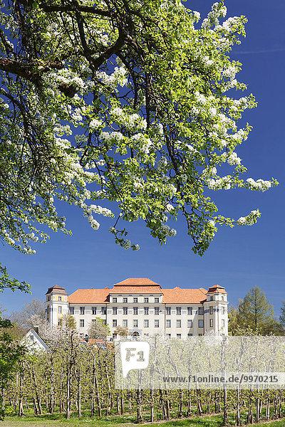 Obstbaumblüte  Neues Schloss  Tettnang  Bodensee  Baden-Württemberg  Deutschland  Europa