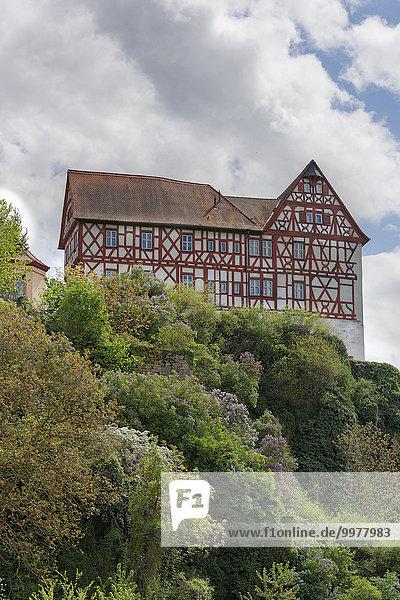 Schloss Homburg  Triefenstein  Spessart  Mainfranken  Unterfranken  Franken  Bayern  Deutschland  Europa