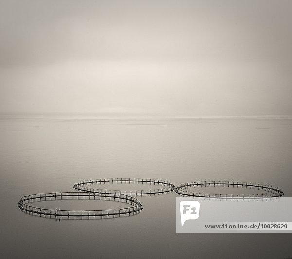 Lachsringe auf ruhigen Gewässern  Färöer-Inseln