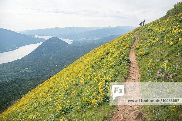 Vereinigte Staaten von Amerika USA Berg Hund klettern