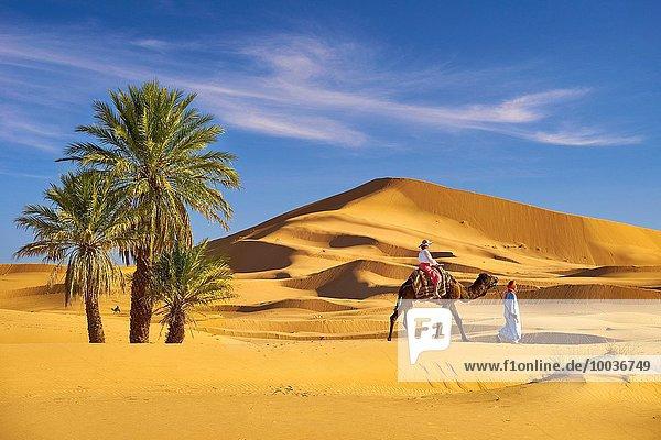 nahe fahren Tourist Wüste Sahara Kamel Merzouga Marokko mitfahren