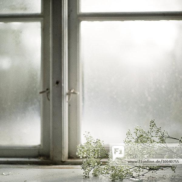 Blume weiß Fensterbank