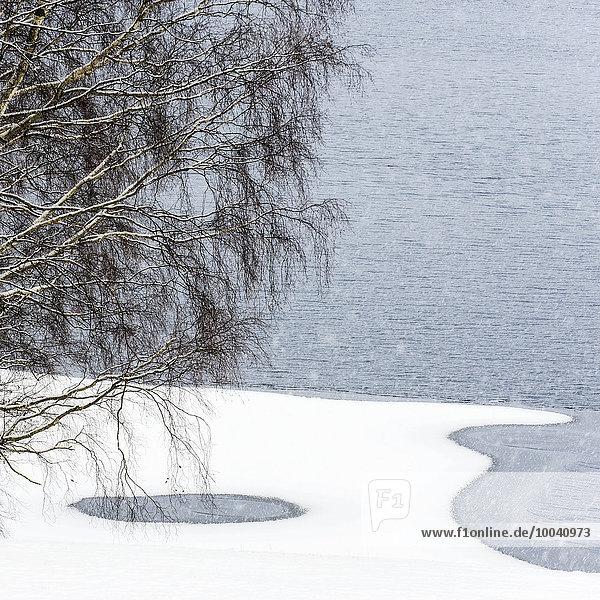 Winter Baum See