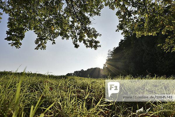 Deutschland  Spessart  Aschaffenburg  Sonnenlicht auf der Wiese
