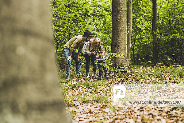 Familie im Wald untersucht kleinen Baum