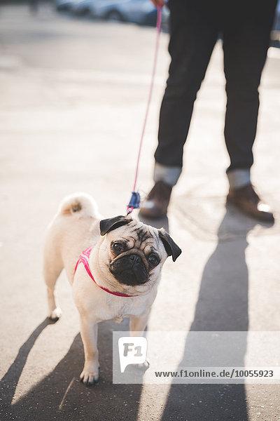 Junger Mann mit Hund auf der Straße