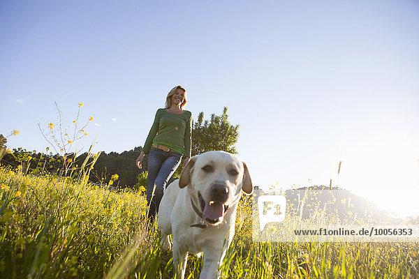 Reife Frau geht Labrador Retriever in sonnigen Wildblumenwiese