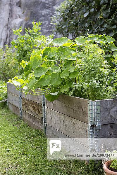 Pflanzen  die in Kisten im Gemüsegarten wachsen