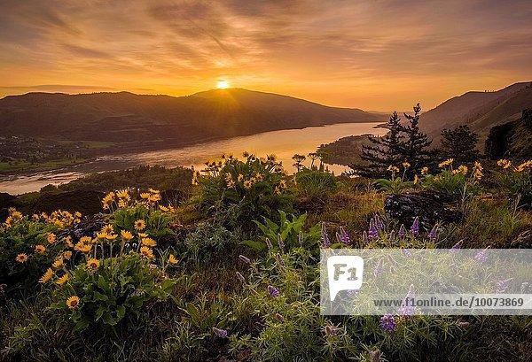 über Sonnenaufgang Fluss Kopfbedeckung Schlucht Lupine Oregon