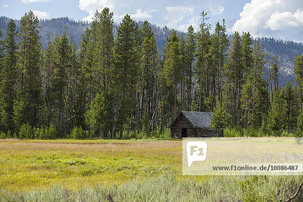 Abandoned rustic cabin in remote field