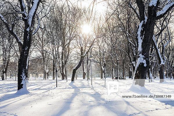 Baum Schnee