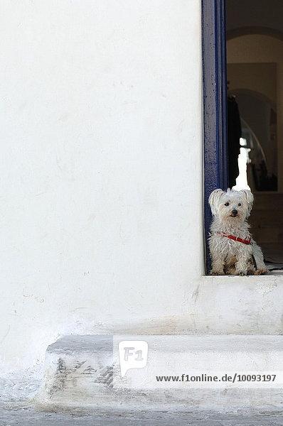 sitzend Hund frontal