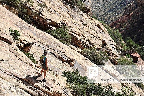 Junge Klettererin mit Blick von der Steilwand  Mount Wilson  Nevada  USA