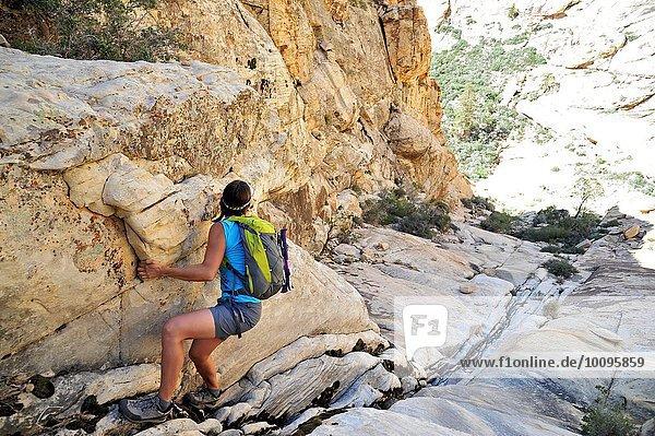 Junge Bergsteigerin  die sich in die steile Felsspalte zieht  Mount Wilson  Nevada  USA
