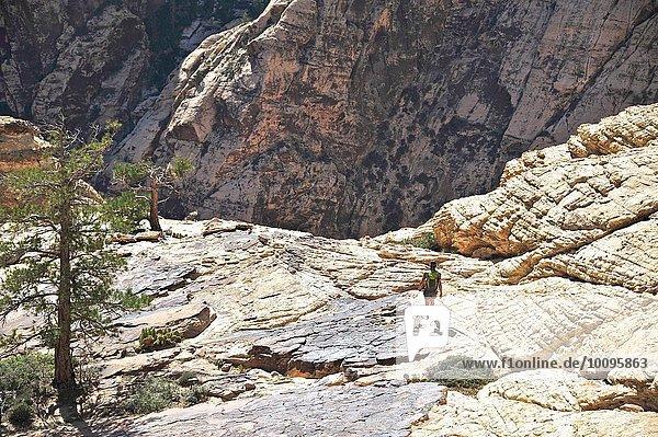 Rückansicht einer jungen Wanderin auf dem Felsen  Mount Wilson  Nevada  USA