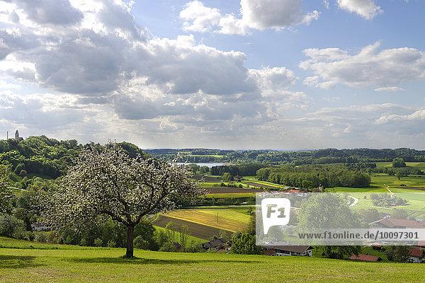 Simssee und Thalkirchen  Bad Endorf von der Ratzinger Höhe  Chiemgau  Oberbayern  Bayern  Deutschland  Europa