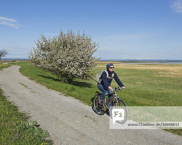 Radfahrerin an der Langen Lacke  Seewinkel  Apetlon  Burgenland  Österreich  Europa