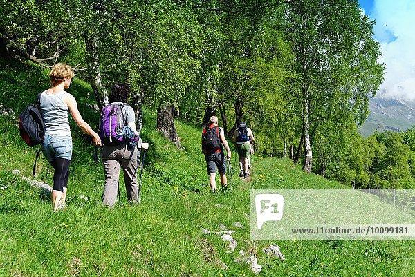 Rückansicht von vier reifen Wanderern  die am Hang entlang wandern  Grigna  Lecco  Lombardei  Italien