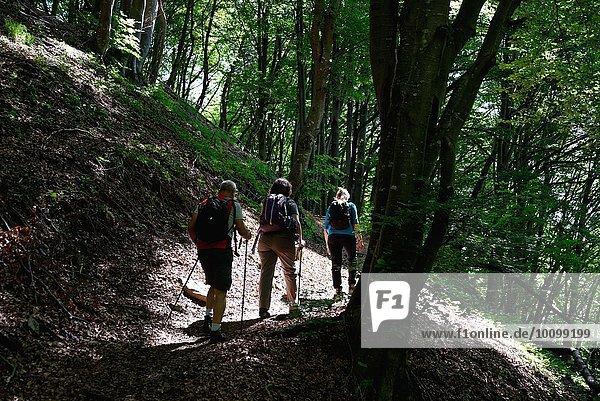 Rückansicht der reifen Wandererinnen und Wanderer beim Wandern durch den Wald