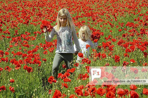 Zwei Mädchen  9 und 4 Jahre  in einem Mohnfeld  Ystad  Schweden  Europa