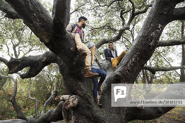 sitzend junge Frau junge Frauen Mann lächeln Baum 2 jung