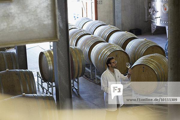 Winzer im Laborkittel bei der Weinuntersuchung im Weinkeller
