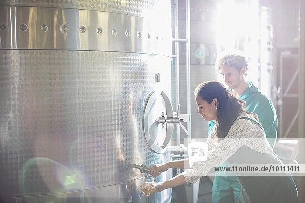 Winzer-Fass-Verkostung Weißwein aus Edelstahl-Behälter im sonnigen Keller