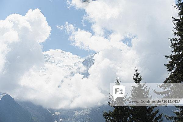 Berg Baum Flachwinkelansicht Kiefer Pinus sylvestris Kiefern Föhren Pinie bedecken Schnee