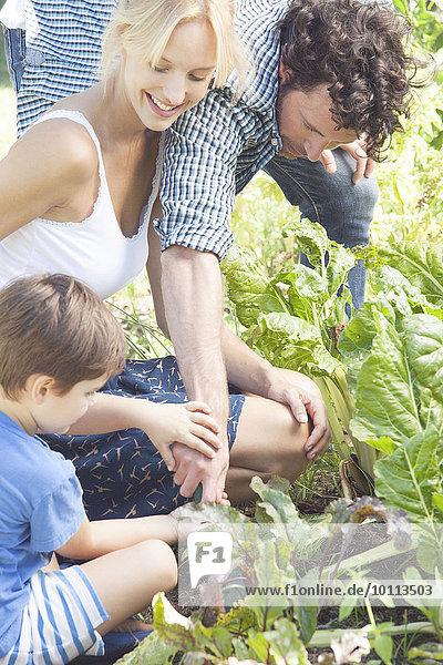 Zusammenhalt Gartenbau