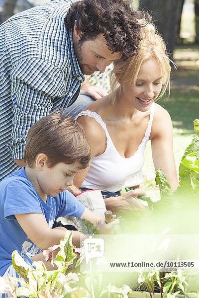 Little boy helping his parents garden