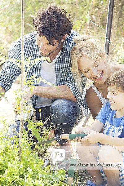 unterrichten Junge - Person klein Menschliche Eltern Garten