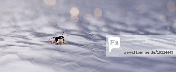 Bodenhöhe Wasser fließen Ameise Bodenhöhe,Wasser,fließen,Ameise