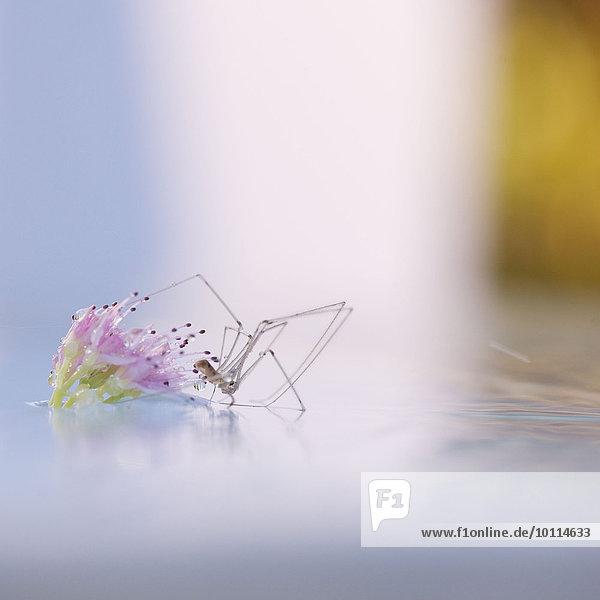 Bodenhöhe Wasser Blume gehen Spinne auf etwas treten