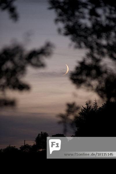 sehen Baum Mond Dämmerung