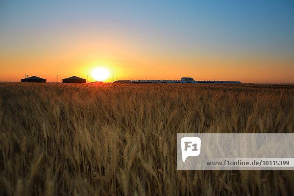 Agrarland Ansicht Luftbild Fernsehantenne Kroatien