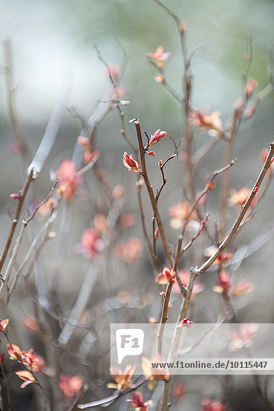 Flowers budding on branches
