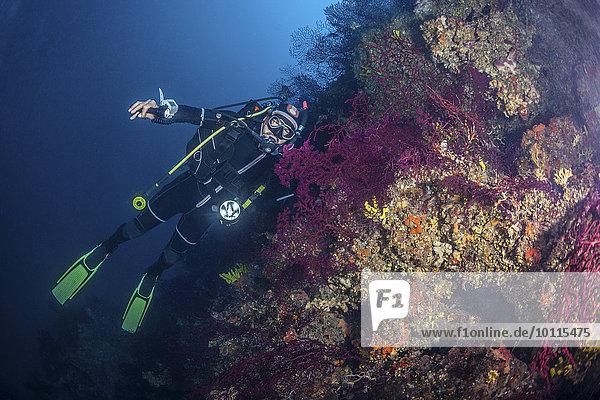 Forschung Taucher Adriatisches Meer Adria Riff