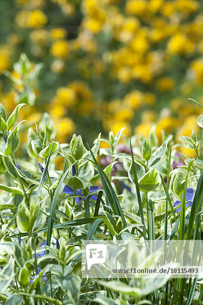 zwischen inmitten mitten Wachstum Pflanze Gras Laub zwischen,inmitten,mitten,Wachstum,Pflanze,Gras,Laub