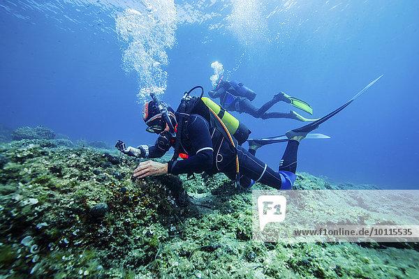 Forschung, Taucher, Meer, Adriatisches Meer, Adria