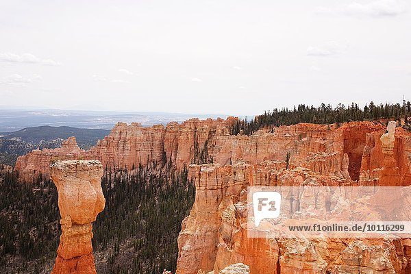 Blick auf Säulenfelsen im Bryce Canyon National Park  Utah  USA