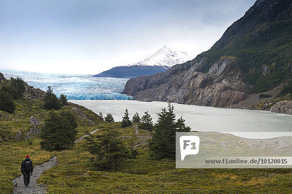 Lago Grey and Grey Glacier  Torres del Paine National Park  Chilean Patagonia  Chile  South America