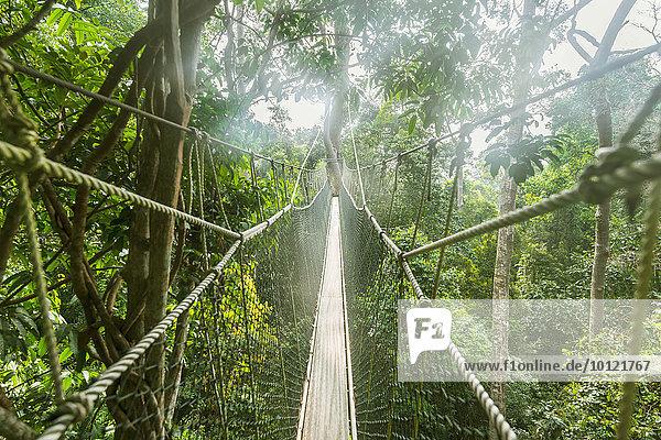 Hängebrücke im Dschungel  Kuala Tahan  Nationalpark Taman Negara  Malaysia  Asien