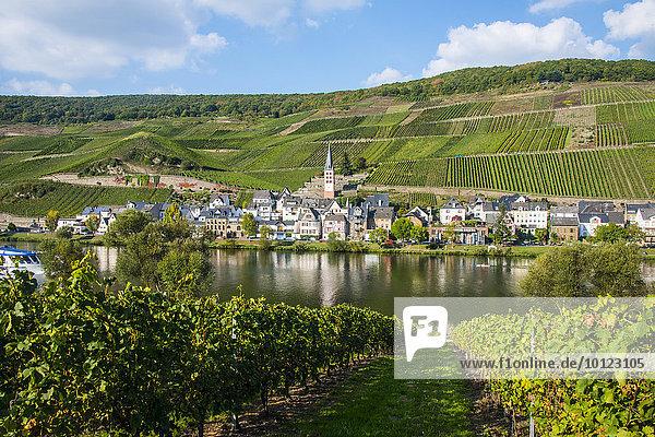 Ortsansicht  Weinberge  Mosel  Zell  Moseltal  Rheinland-Pfalz  Deutschland  Europa