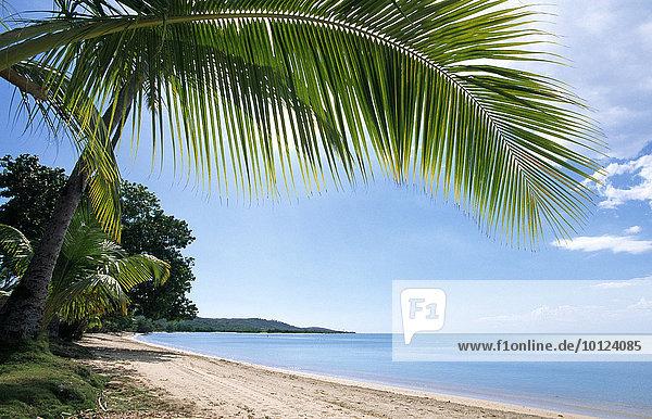 Strand mit Palmen  Boqueron Beach  Puerto Rico  Karibik  Nordamerika
