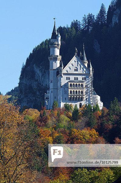 Schloss Neuschwanstein mit Alpsee  Füssen  Allgäu  Bayern  Deutschland  Europa