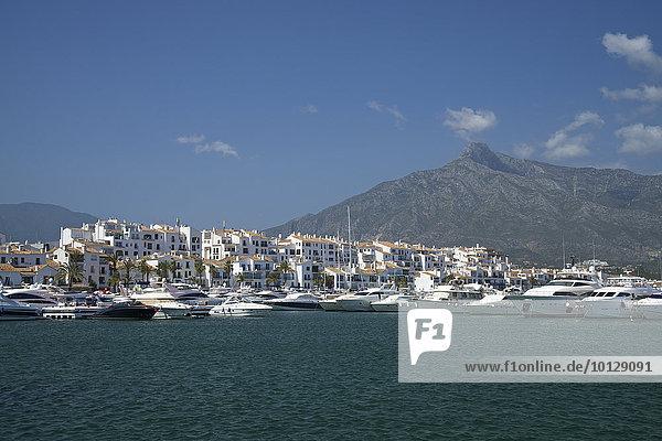 Hafen  Puerto Banus  Marbella  Costa del Sol  Andalusien  Spanien  Europa