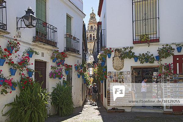 Gasse Calle de las Flores mit Blumen  Cordoba  Andalusien  Spanien  Europa