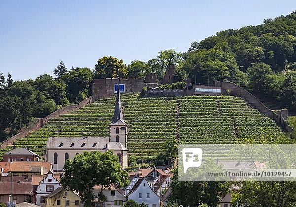 Kirche St. Pankratius und Ruine Clingenburg,  Klingenberg am Main,  Unterfranken,  Franken,  Bayern,  Deutschland,  Europa